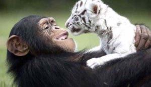 mono-leon-amistad