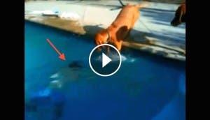 perro-al-agua-salva-dueno