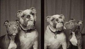 perros-agresivos-adorables