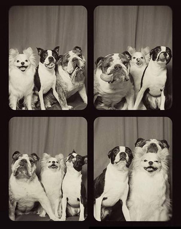 pit-bull-photo-booth-love-3