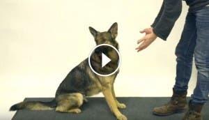 reaccion-de-perros-ante-truco-de-magia-curioso