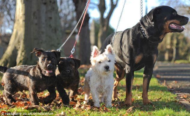 Rottweiler y Terrier
