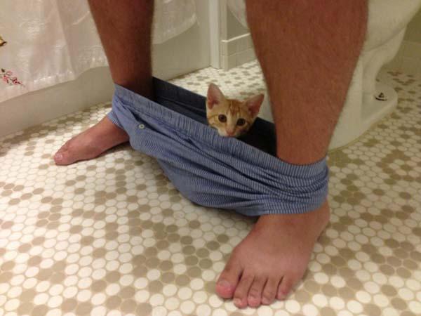 Mascotas-baño1