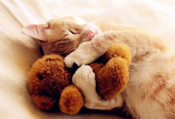 animales abrazando peluches 1