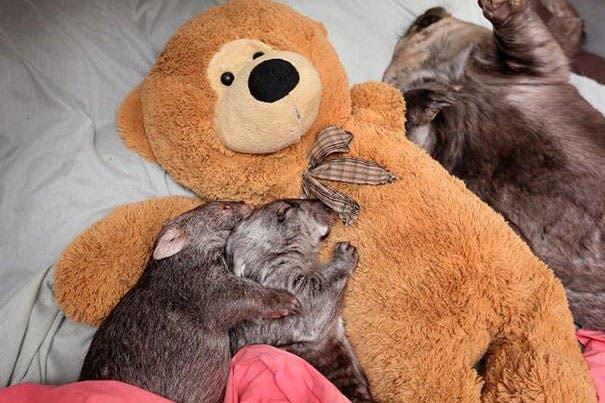 animales abrazando peluches1219-620x