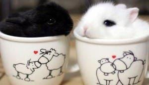 animales taza