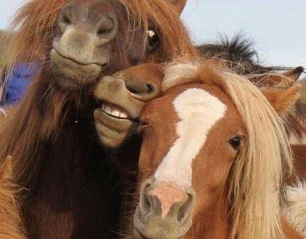 caballo-selfie