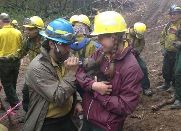 cinco-cachorros-lobo-rescatados-incendio-Funny-River