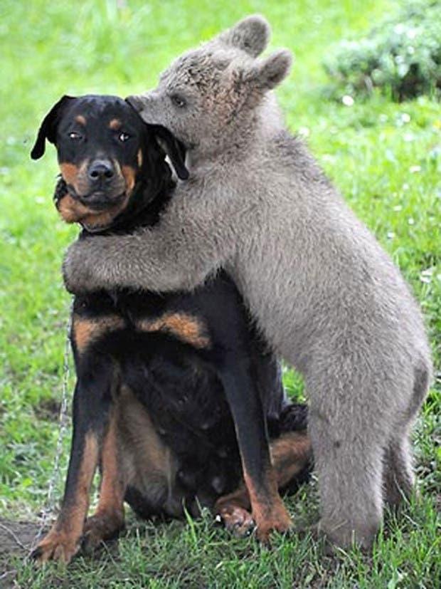 datos-curiosos-de-perros-2