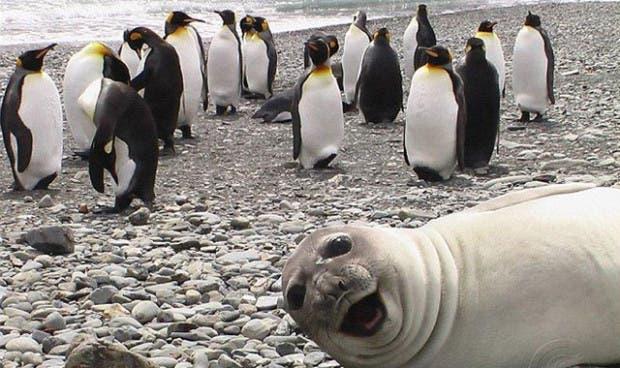 foca-haciendo-selfie