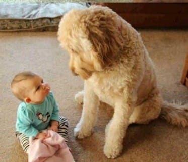 fotos-hijo-mascota copia 7