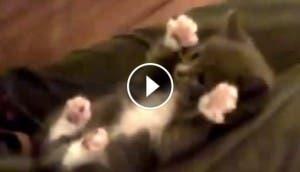 gatito cosquillas