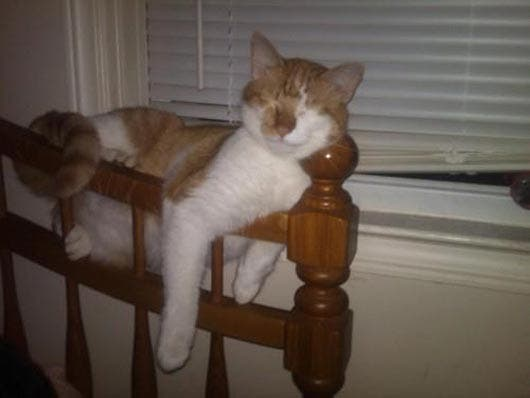 gato-dormir11