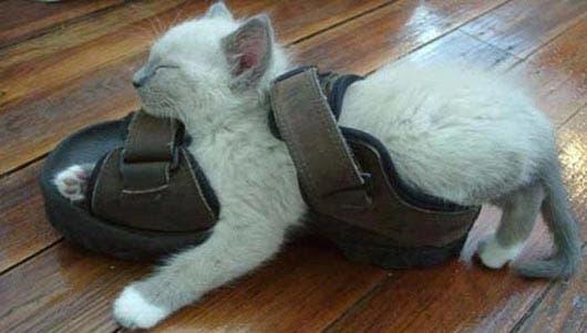 gato-dormir17