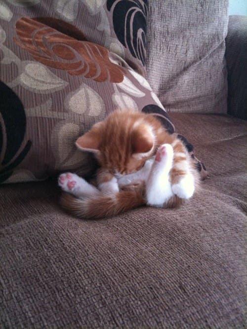 gato-dormir21