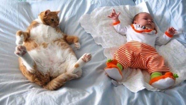 gato-dormir23