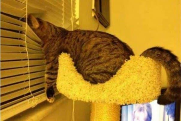 gato-dormir24