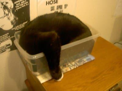 gato-dormir25