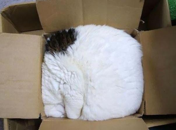 gato-dormir26