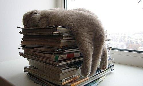 gato-dormir27