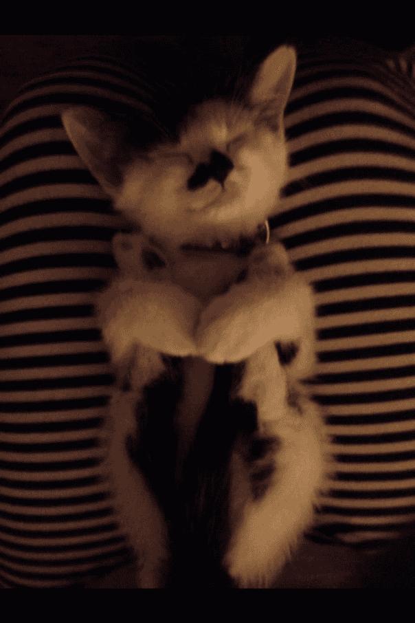 gato-dormir32