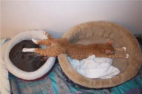 gato-dormir33