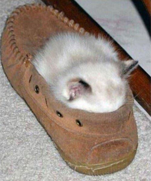 Resultado de imagen de lugares extraños para dormir gatos
