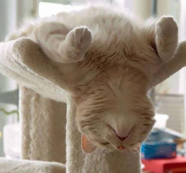 gato-dormir37