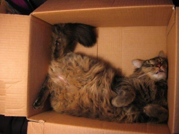 gato-dormir5