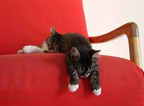 gato-dormir8