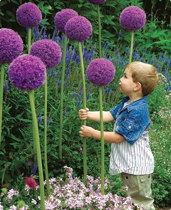 ideas-para-jardin-2