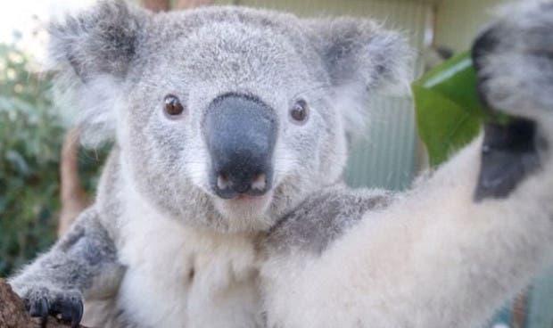 koala-selfies