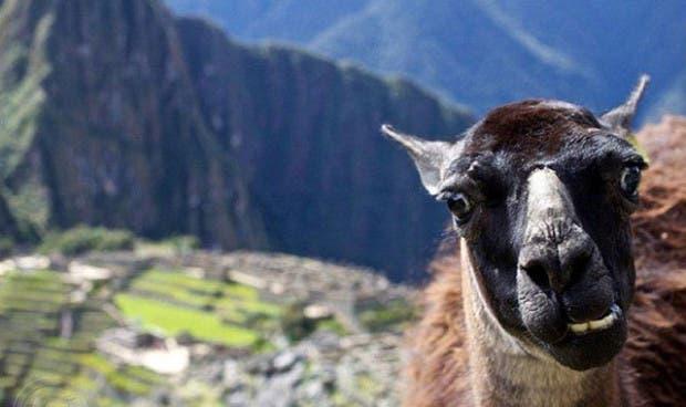 los-mejores-selfies-de-animales