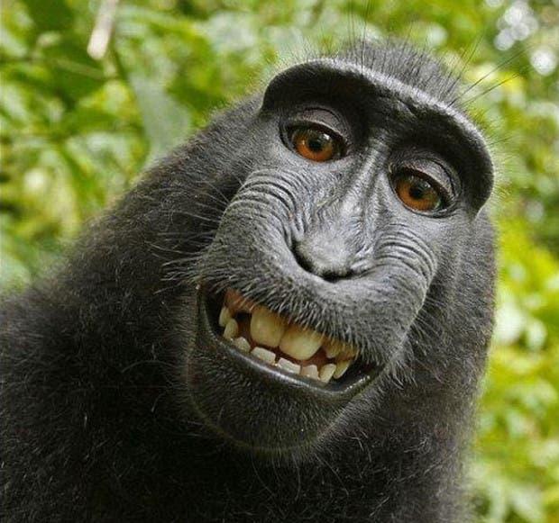 mono-haciendo-selfie
