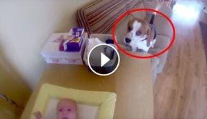 perro-ayuda-cambiar-bebe