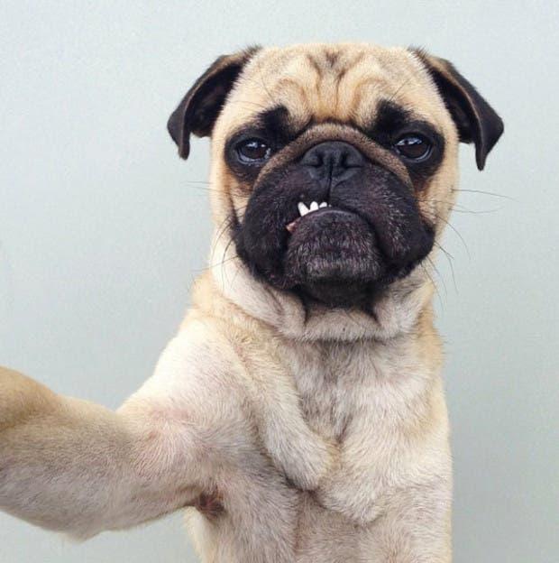 perro-haciendo-selfie
