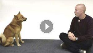 perros-reaccionan-ladridos-humanos-play