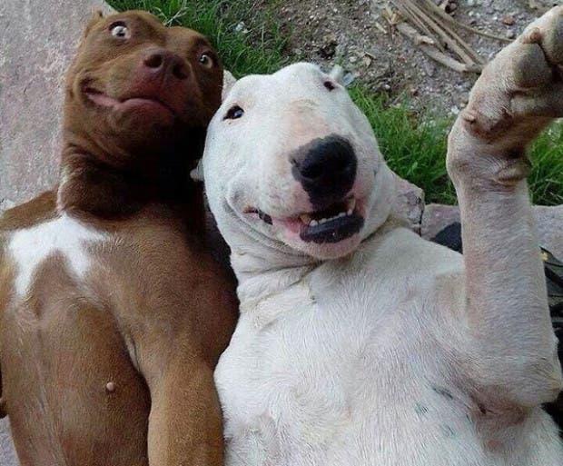 perros-selfie