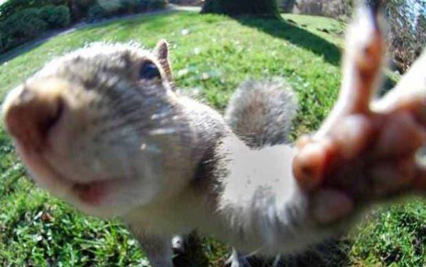 selfie-ardilla
