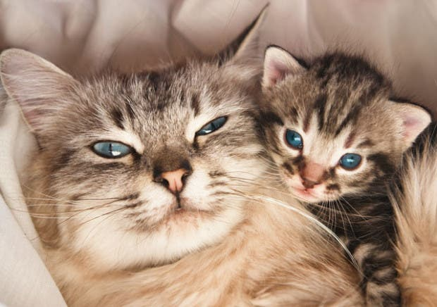 selfie-gatos