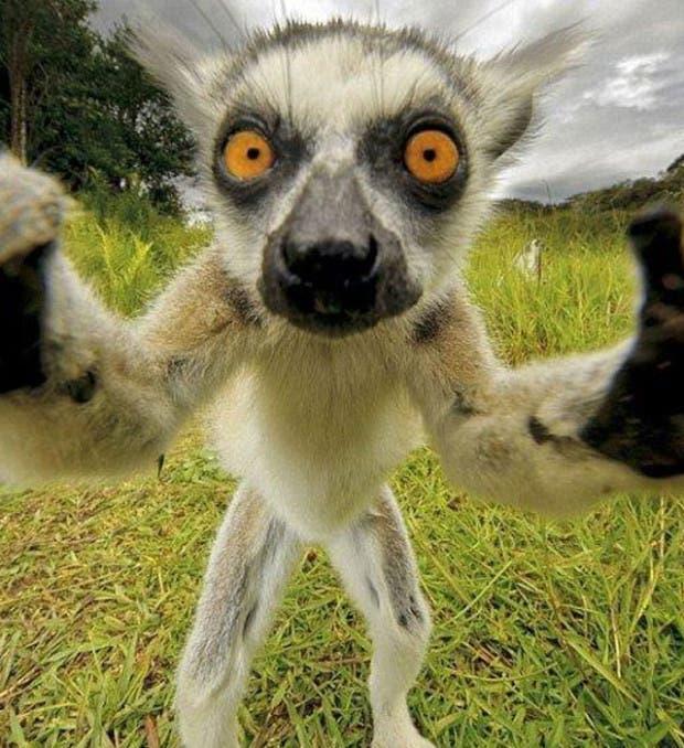 selfies-de-animales