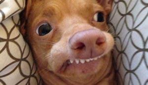 tuna-perro-simpatico