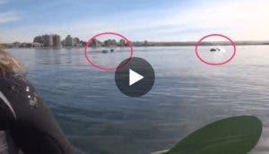 avistan-ballena-kayak-play