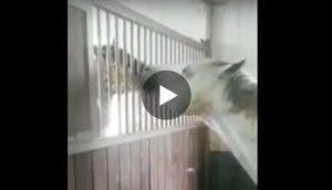 caballo-alimenta-otro-play