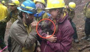 cachorros-lobo-rescatados-incendio