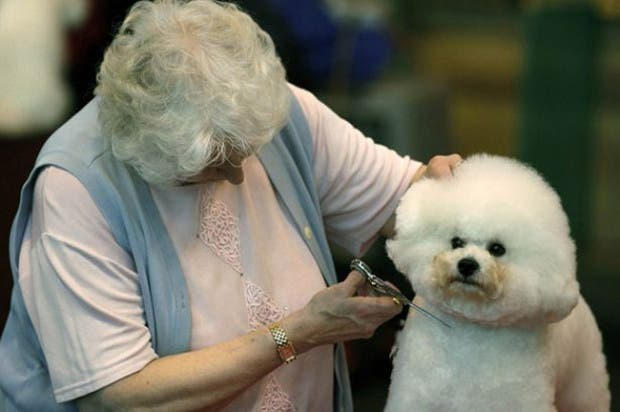 dueños y perros 1