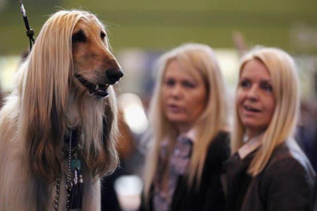 dueños y perros 13