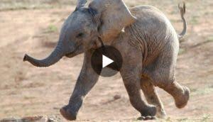 elefante-bebe-tierno-play