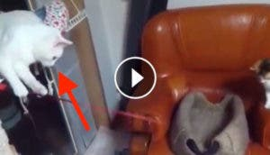 gato-pescando-play