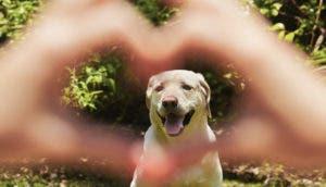 perro-bonito-corazon-manos